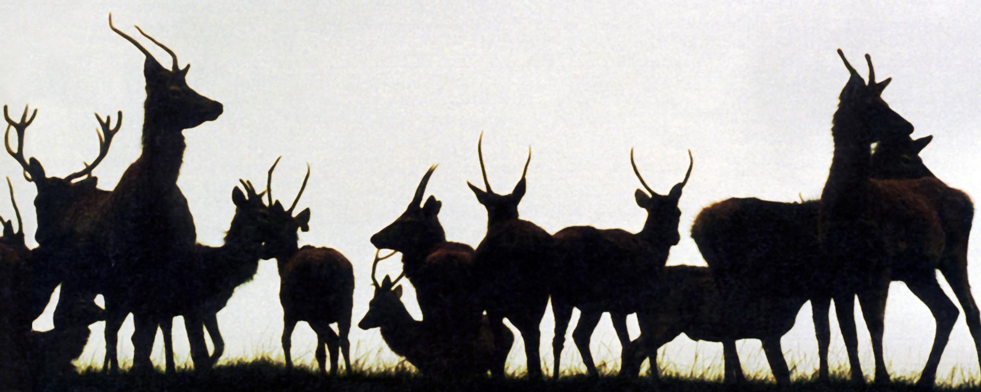 Beinghunted. Deer 2001 10th Anniversary